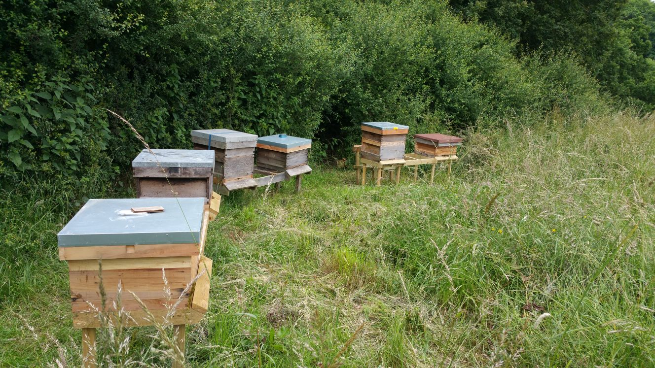 line of beehives
