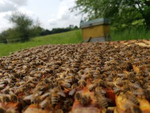 Bees lined up